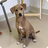 Adopt A Pet :: James - Spring Valley, NY