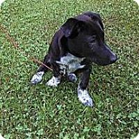 Adopt A Pet :: Emmett - Hancock, MI