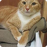 Adopt A Pet :: Elvis - Mobile, AL