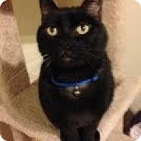 Adopt A Pet :: Cubby - Modesto, CA