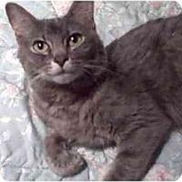 Adopt A Pet :: Ashe - Colmar, PA