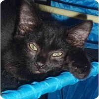 Adopt A Pet :: Jocelyn - Davis, CA