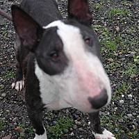 Adopt A Pet :: BENJAMIN - San Pablo, CA