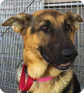 German Shepherd Dog Mix Dog for adoption in Walnut Creek, California - Twist