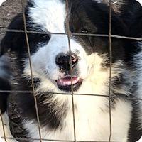 Adopt A Pet :: Emily - SOUTHINGTON, CT