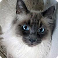 Adopt A Pet :: Ohana - Spokane Valley, WA