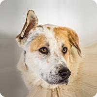 Adopt A Pet :: Forest - Prescott, AZ