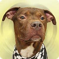 Adopt A Pet :: Red - Cincinnati, OH