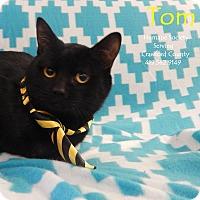 Adopt A Pet :: Tom - Bucyrus, OH