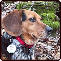 Adopt A Pet :: Mrs. Yarma Chubbs - PORTLAND, ME