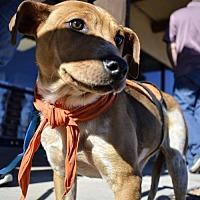 Adopt A Pet :: DORI - Pena Blanca, NM