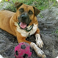 Adopt A Pet :: Remi *SPONSORED* - Umatilla, FL