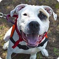 Adopt A Pet :: Reesie - Acushnet, MA