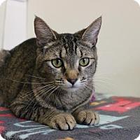 Adopt A Pet :: Kadee - Boise, ID