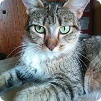 Adopt A Pet :: Birdie Bell - South Saint Paul, MN