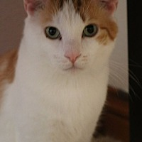 Adopt A Pet :: McLane - Rochester, MN