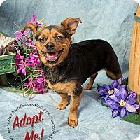 Adopt A Pet :: Heidi - Gillsville, GA