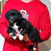 Adopt A Pet :: Love - South Euclid, OH