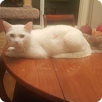 Adopt A Pet :: Ace - Smyrna, GA
