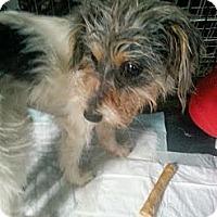Adopt A Pet :: Charlotte - Sugar Land, TX