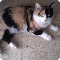 Adopt A Pet :: Missy - Tempe, AZ