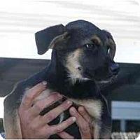 Adopt A Pet :: Selene - Alexandria, VA