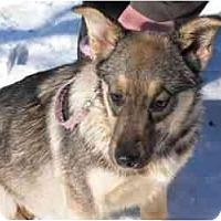 Adopt A Pet :: Trixie - Rigaud, QC