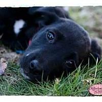 Adopt A Pet :: Josie - Haverhill, MA
