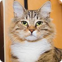 Adopt A Pet :: Kiwi - Irvine, CA