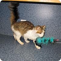 Adopt A Pet :: Katie - Harrisburg, NC