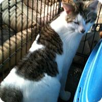 Adopt A Pet :: Carey - Madisonville, LA