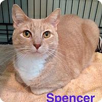 Adopt A Pet :: SPENCER aka SPECKLES - Hamilton, NJ