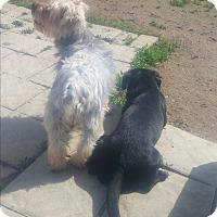 Adopt A Pet :: PIET - New Windsor, NY
