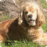 Adopt A Pet :: Daphne - Flossmoor, IL