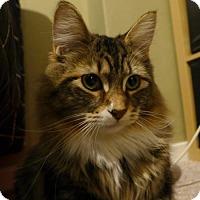 Adopt A Pet :: Oscar Ave - Edmonton, AB