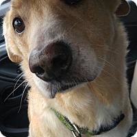 Adopt A Pet :: Bucky - Dayton, OH