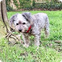 Adopt A Pet :: OPI - Spring, TX