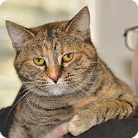 Adopt A Pet :: Paige - Ottumwa, IA