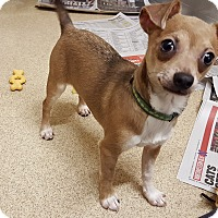 Adopt A Pet :: Arrow - Naperville, IL