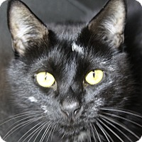 Adopt A Pet :: Sly - Sarasota, FL