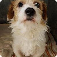 Adopt A Pet :: Crockett in Houston - Houston, TX