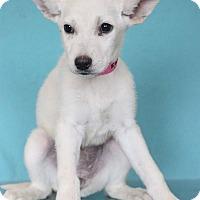 Adopt A Pet :: Janis - Waldorf, MD