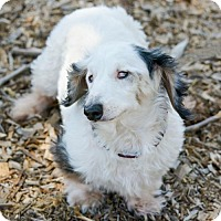 Adopt A Pet :: Pico - Anaheim, CA