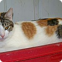 Adopt A Pet :: Doris - Dover, OH