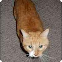 Adopt A Pet :: Red - Milwaukee, WI