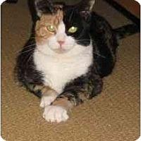 Adopt A Pet :: Baby - Jenkintown, PA