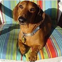 Adopt A Pet :: Ricky - San Jose, CA
