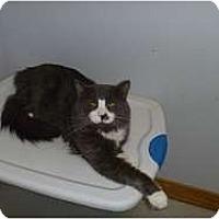 Adopt A Pet :: Luigi - Hamburg, NY
