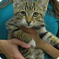 Adopt A Pet :: Tequilla - Troy, OH