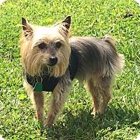 Adopt A Pet :: Duchess - Ashland City, TN